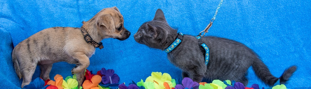 Forgotten Paws Animal Rescue