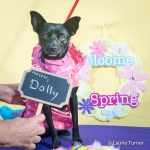 Dolly20170401FPAR2