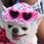 Ella Summer Fun