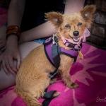 Clara Bow - Adopted