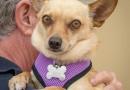 FPAR Adoptable Dog Mindy