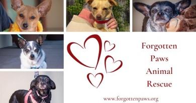 Forgotten Paws & COVID-19
